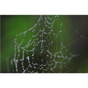 Dewy Web II