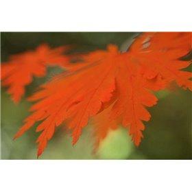 Autumn Leaf Mirage II