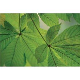 Chestnut Leaves Duet II Green
