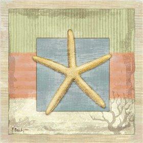 Montego Starfish