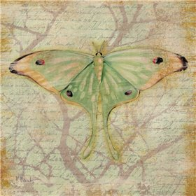 Vintage Butterflies III