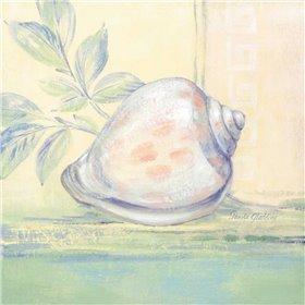 Tranquil Seashells I