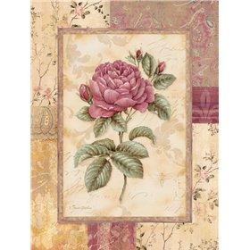 Provence Rose I