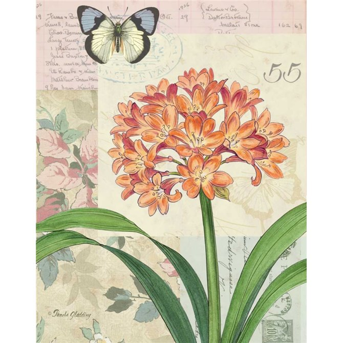 Clivia Floral Collage