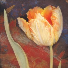 Dusk Tulip II