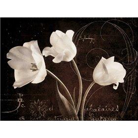 Garden Love Letter II