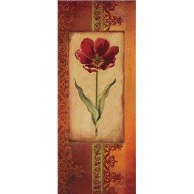 Mediterranean Tulip I