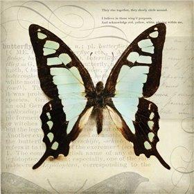 Butterflies Script I