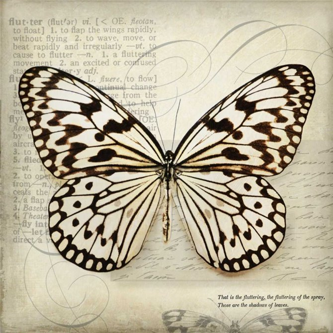 Butterflies Script III