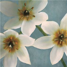 Lily Parfait I
