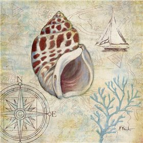 Discovery Shell IV