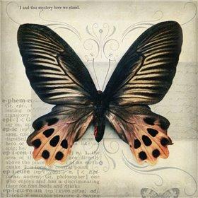 Butterflies Script IV