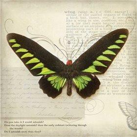 Butterflies Script VI