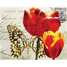 Carte Postale Tulip II