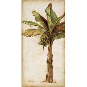 Tropic Banana II