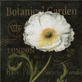 Botanical Garden II