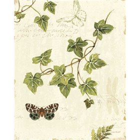 Ivies and Ferns II
