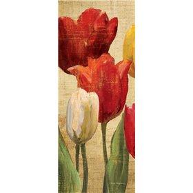 Tulip Fantasy on Cream II