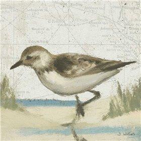 Beach Bird IV