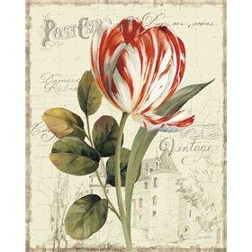 Garden View II - Red Tulip