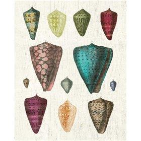 Colorful Shell Assortment II