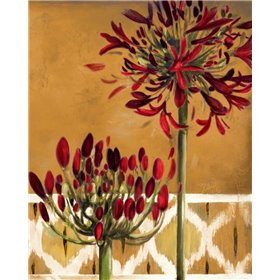 Red Lily of the Nile II
