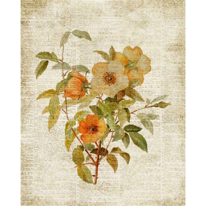 Roses on Newsprint I