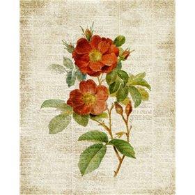 Roses on Newsprint II