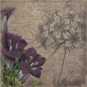Floral outline1