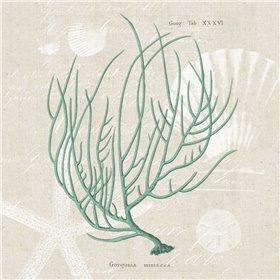 Gorgonia Miniacea