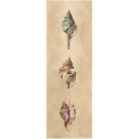 Seashells Panel I