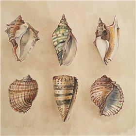 Seashells II