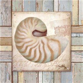 Beach Shell III