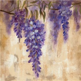 Wisteria Bloom II