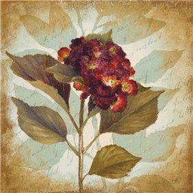 Aubergine Hydrangea Portrait