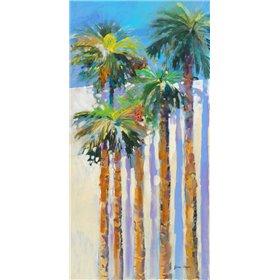 Shadow Palms II