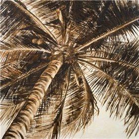 Coconut Palm II