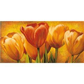 Bouquet of orange tulips