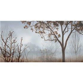 Early Morning Mist I
