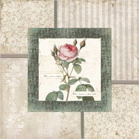 Rosa II
