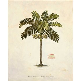 Nut Palm Illustration