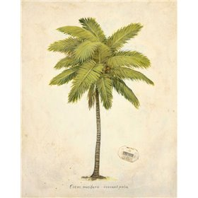 Coconut Palm Illustration
