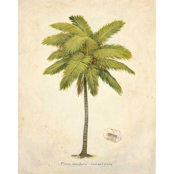 Coconut Palm Illustration