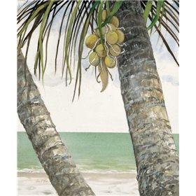 Seaside Coconuts