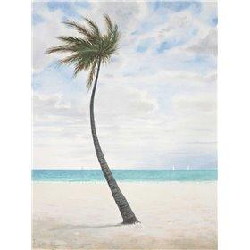 Breezy Palm 1