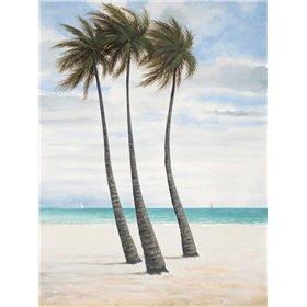 Breezy Palm 2