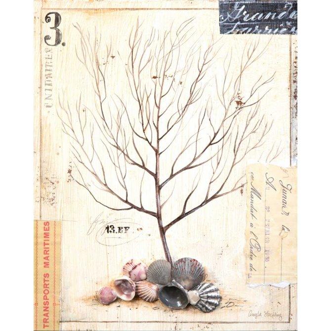 Coral Sketchbook