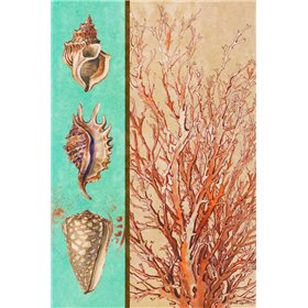 Coral and Sea Shells I