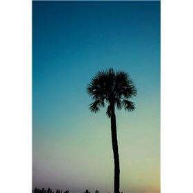 Palm Solo