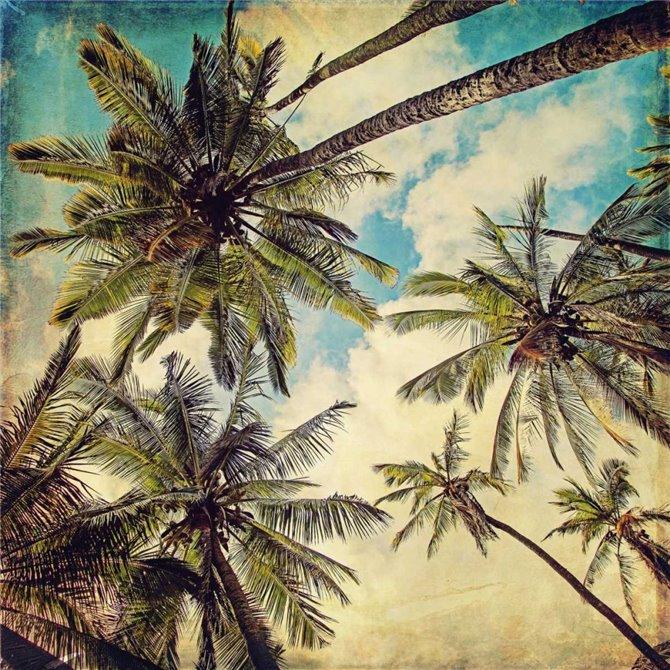 Kauai Island Palms